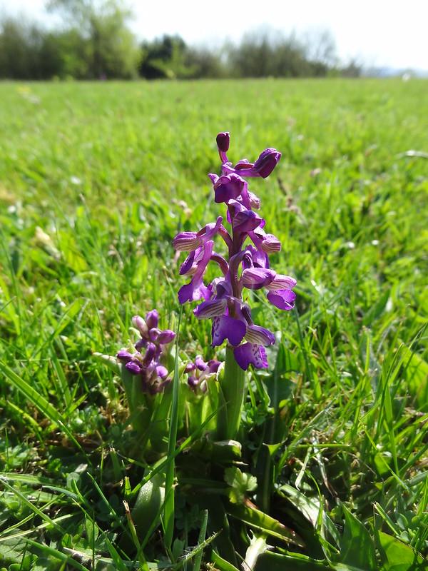 Orchid No. 3!