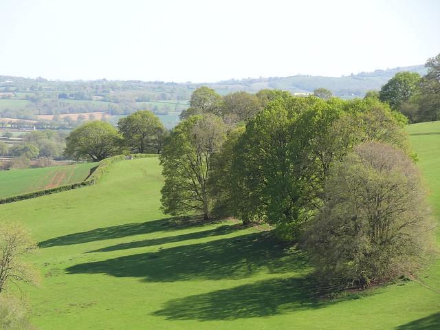 Sunny Sunday Stroll: Tree shadows