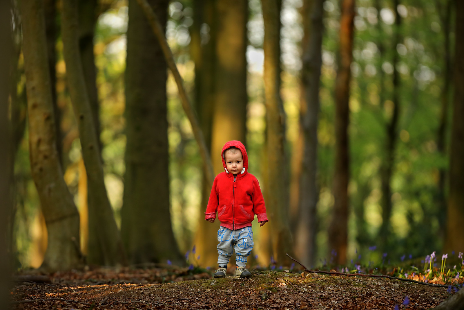 Wee Boy in the Woods