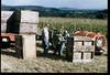 1985 1st RC Harvest 0181320-0070007CHEHALEM_3