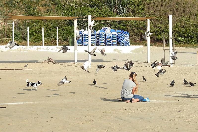 Dog and pigeons