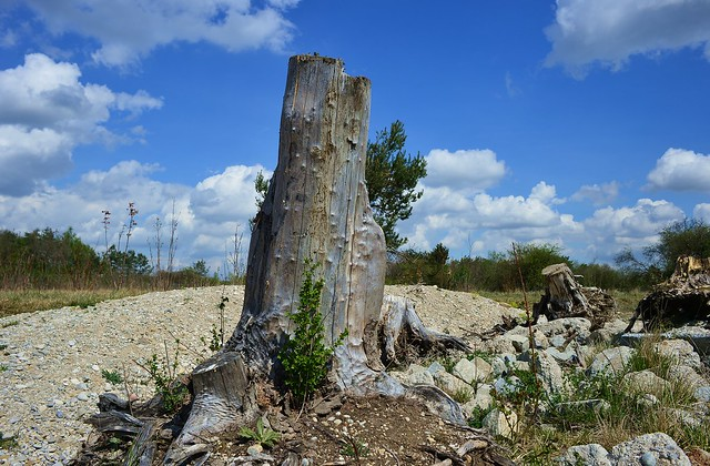 Munich - Tree Stump