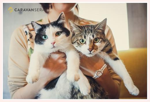 2匹のネコ(オスとメス) ご自宅へ出張撮影
