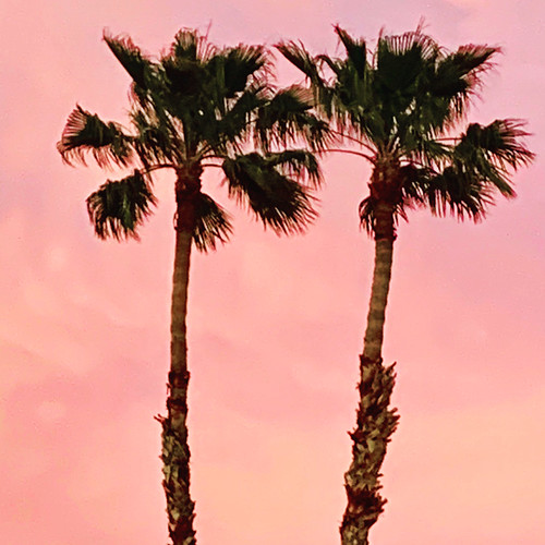 sunsetskypalmtreestreescloudsiphonepinkbeautifuldesertmojavedesertusaamericasouthwest