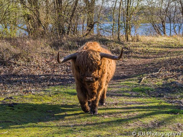 Highlander in the Low Lands