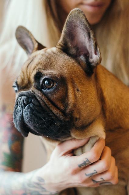 Attractive tattooed woman cuddling a puppy.
