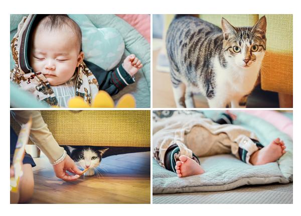 眠る赤ちゃんとネコ かわいい❤