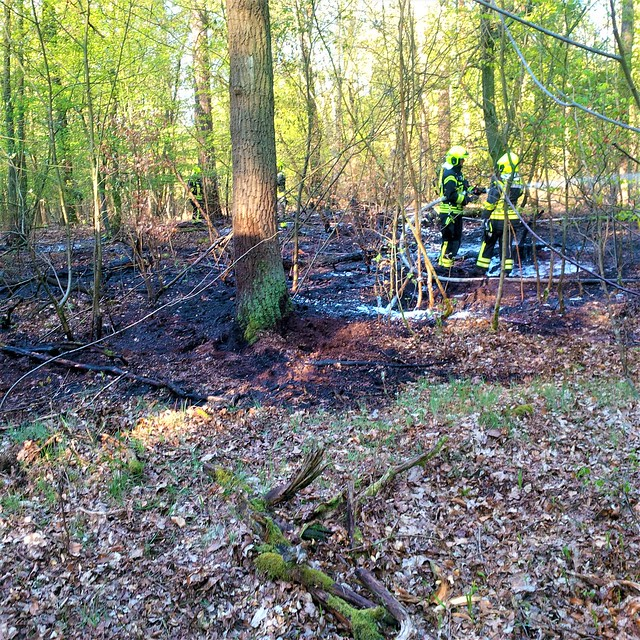 Forstamt Pankow Revier Buch Frühling 2020 Feuer bei uns in Wald
