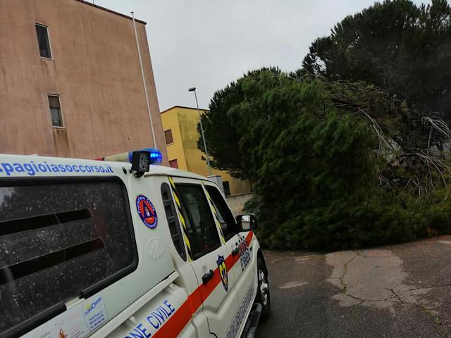 cade grosso albero di pino