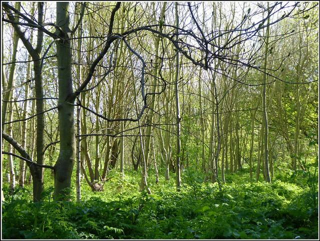 Treescape & Nature ...