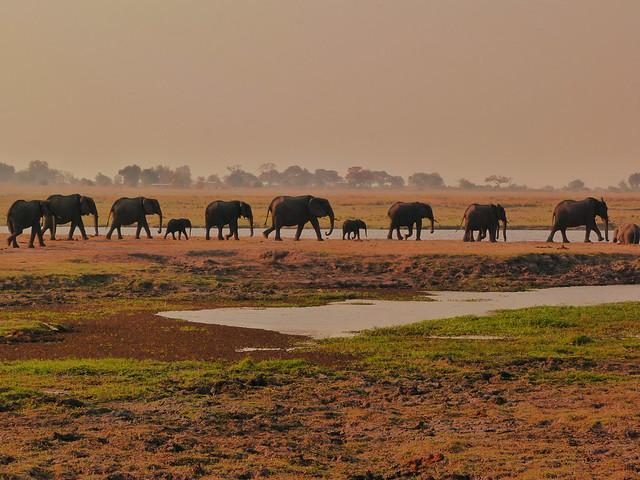 Elefantes en Botswana (Guía con los lugares imprescindibles que ver en Botswana)