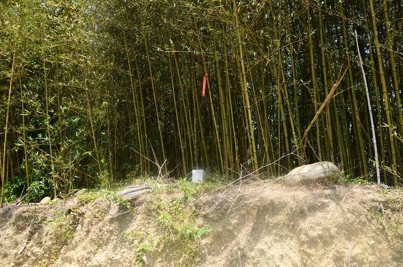 茄苳坑冠字高(20)土地調查局圖根點(Elev. 338 m) 1
