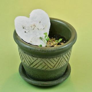 Plantable Seed Paper Tutorial