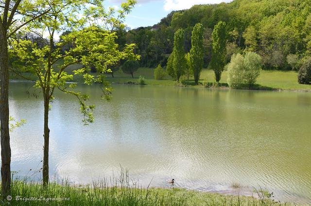 Le lac vétu de vert