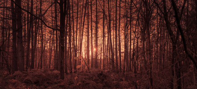The Forest on the Red Planet.