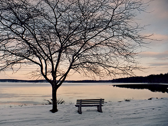 Massabesic Park Bench