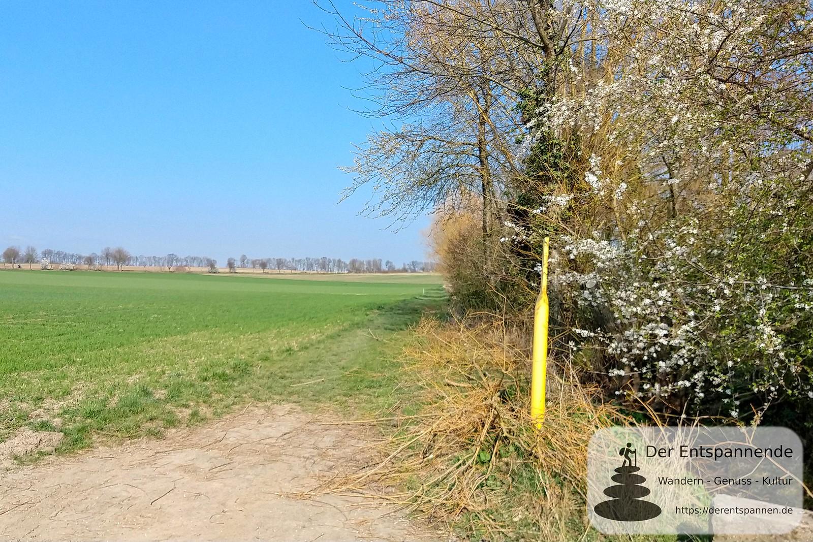 Langenbacher Graben (12Selzbogen im März)