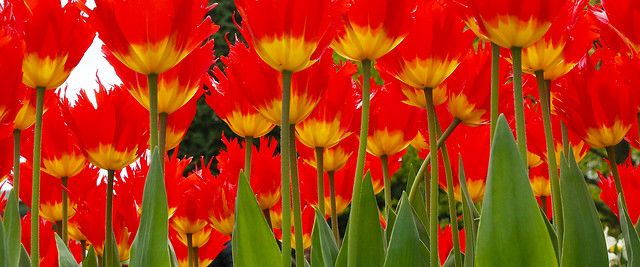 Red_Yellow_CH_