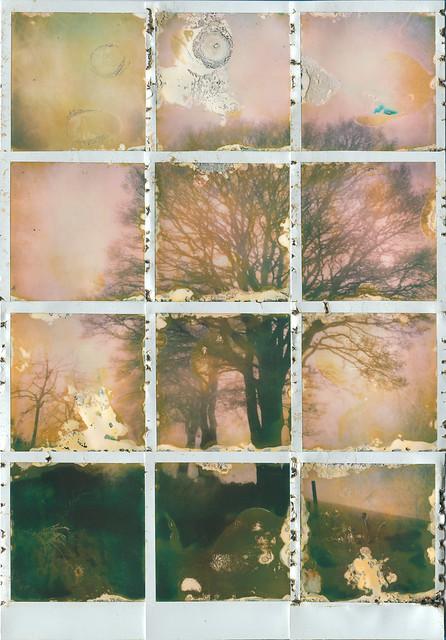 TREE FOUR