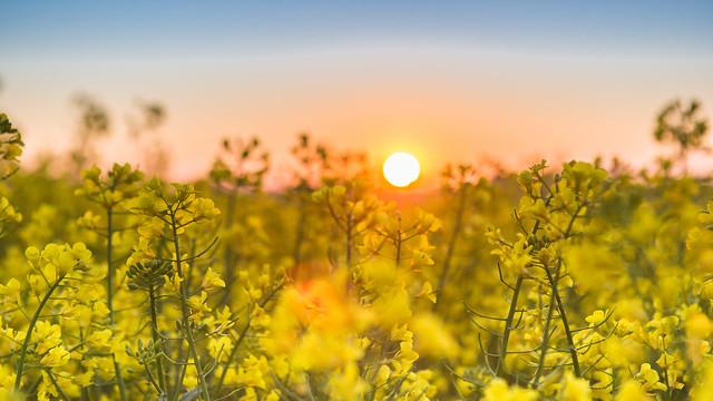 Eifel-Sunrise