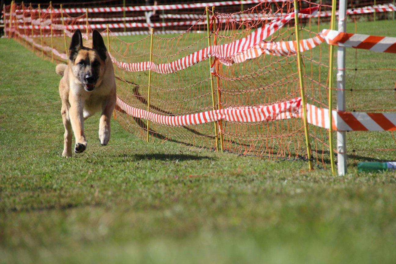 Hundeplauschrennen 2018