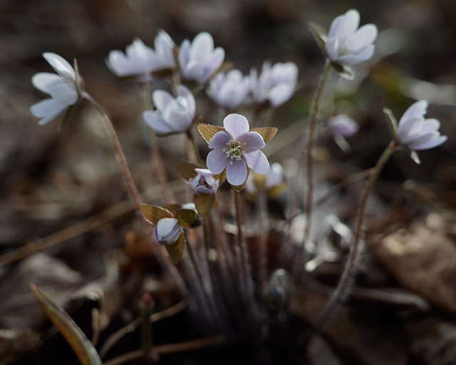 forest flowers, 4-16-20