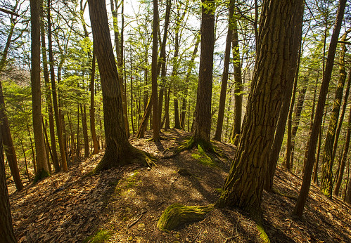 earthday life nature landscape peace peaceful environment woods woodland quotes planet canon hike hiking adventure outdoors hemlocks 2020