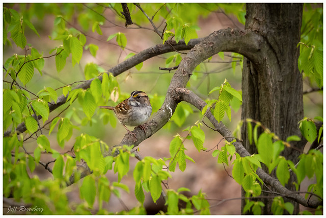 Sparrow Up In The Tree