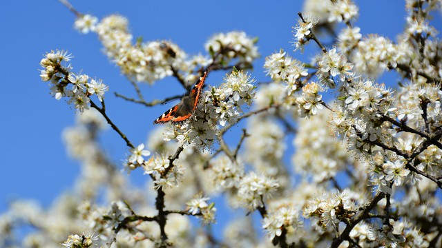 In among the Hawthorn