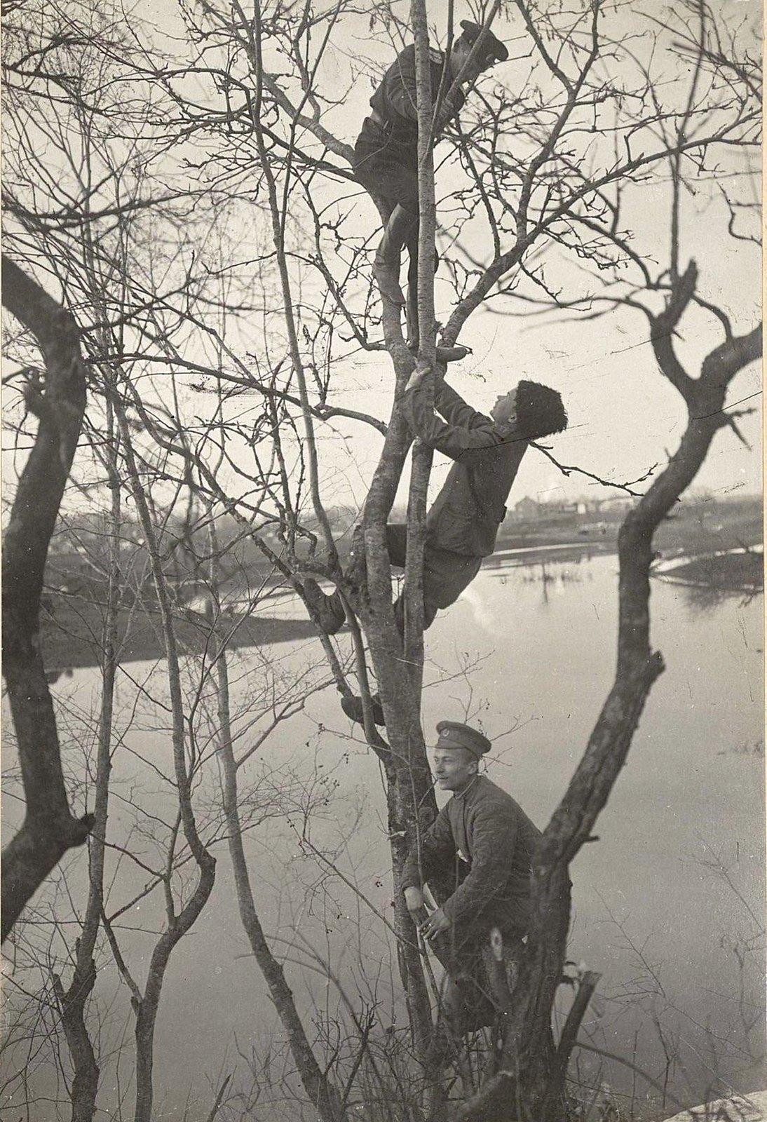 Трое военных на дереве