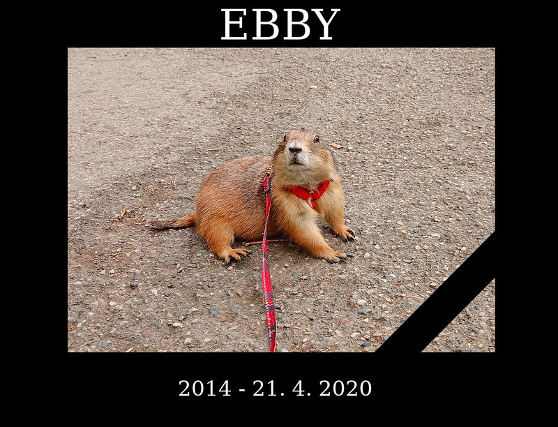 Ebby - parte