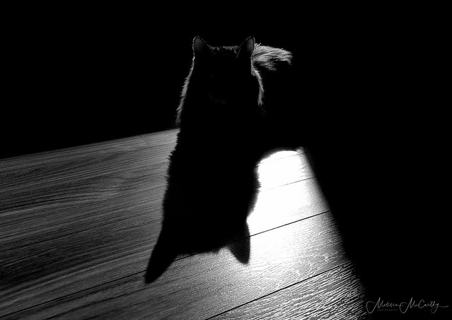 Just a kitty and her shadow. :)
