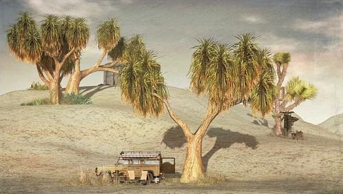 Trees & Sand