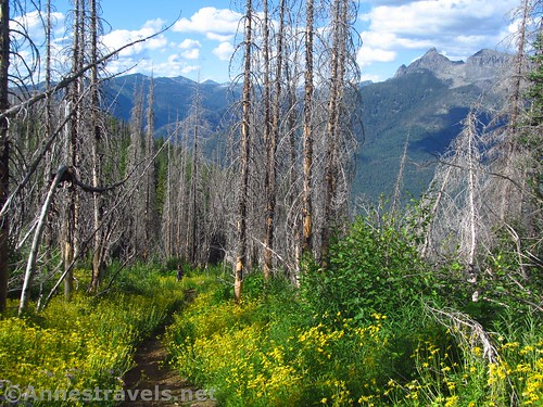 Dead trees and views along the Berray Mountain West Trail, Cabinet Mountains Wilderness, Montana