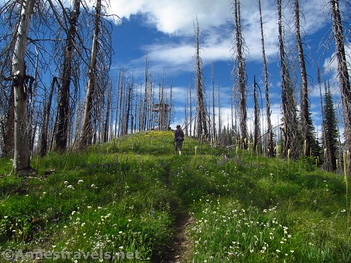 The hill before the Berray Mountain Lookout, Cabinet Mountains Wilderness, Montana