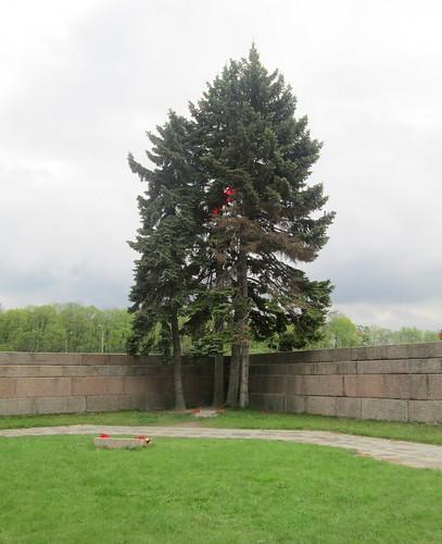 Tree, Eternal Flame Enclosure, Field of Mars, St Petersburg