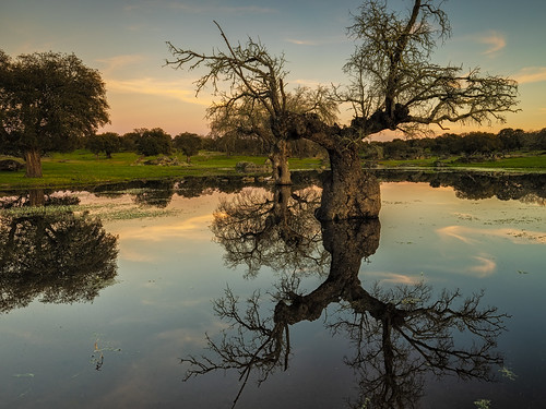 eduardoestellez sunset trees dry watery islets landscape lake background lagoon water shore dehesa nature reflection green extremadura arroyodelaluz park pasture nobody white horizontal beautiful oaks color spain river blue environment wallpaper meadow caceres natural calm colorful beauty reflected relaxation tranquil idyllic pond forest reflections scenery