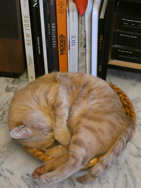 sieste de chat 1