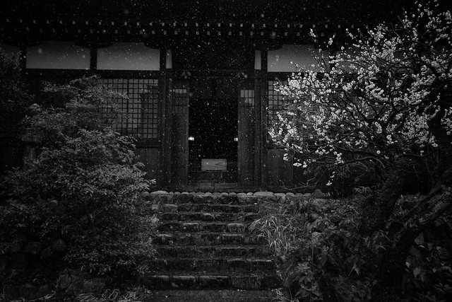 Snow & Blossom At A Temple In Oku Tama, Japan