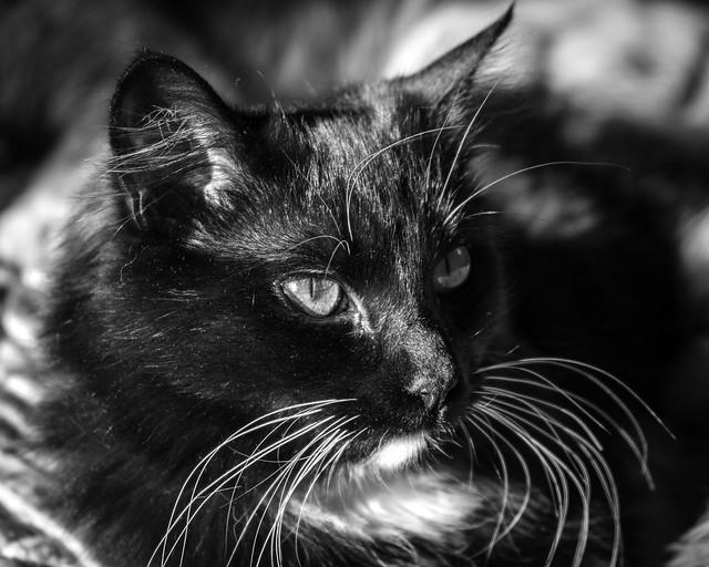 0246937642311771-123-20-04-Cute Kitten-6-Black and White
