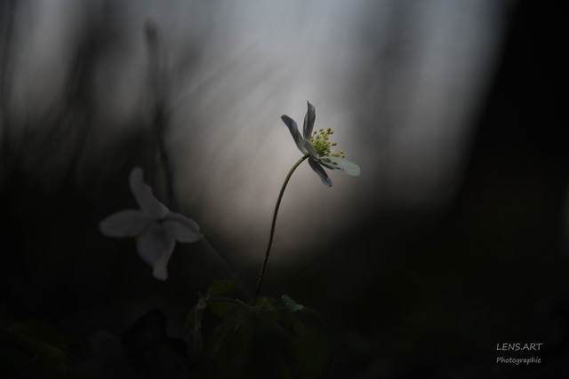 Kaum noch Licht - Missing light