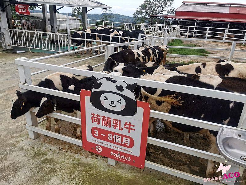 台東旅遊 初鹿牧場35