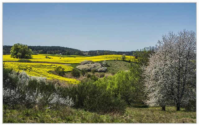 Blühende Landschaft bei Blumenholz / Explore