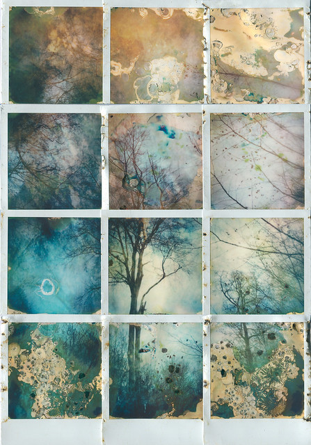 TREE FIVE