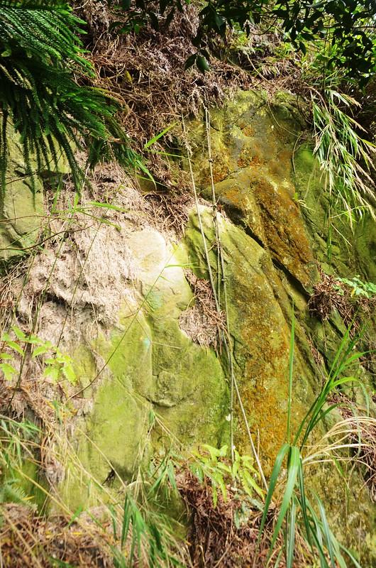 石觀音山峭壁拉繩段 (2)