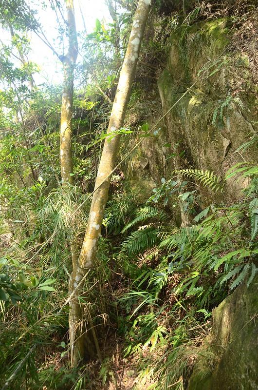 石觀音山峭壁拉繩段 (1)