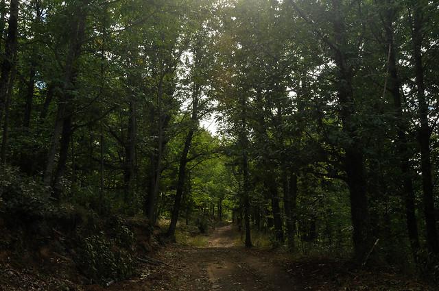 Agradable paseo por el Castañar (Castanea sativa) de Hervás (Cáceres).