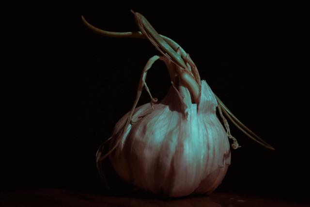 Garlic. UV+IR