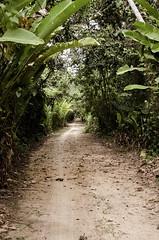 579 - Into the Jungle