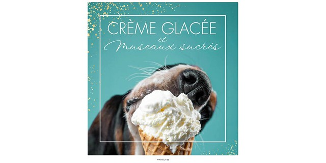 Crème glacée et museaux sucrés